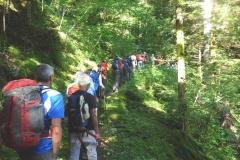 3- In gruppo nel bosco 1